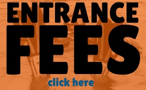 1 delphfrontpageentrancefees2018